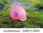 Shells   Snails   Pink Tree...