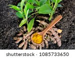 small seedlings and roots of... | Shutterstock . vector #1085733650