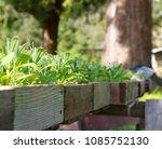 flower seedlings in sunshine | Shutterstock . vector #1085752130