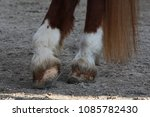 Hooves Of A Horse