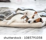 cat and dog sleeping. pets... | Shutterstock . vector #1085791058