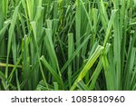close up of exotic tropical eco ... | Shutterstock . vector #1085810960