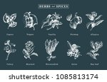 drawn spices and herbs vector... | Shutterstock .eps vector #1085813174