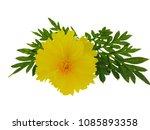 flowers on white background. | Shutterstock . vector #1085893358