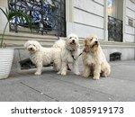 Dogs Family. Spain. Madrid.