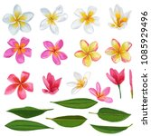 plumeria flowers and leaves set.... | Shutterstock .eps vector #1085929496