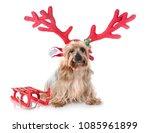 yorkshire terrier in front of... | Shutterstock . vector #1085961899