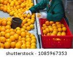 farmers in a warehouse... | Shutterstock . vector #1085967353