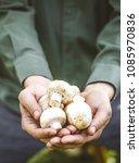 organic mushrooms. healthy food.... | Shutterstock . vector #1085970836