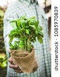 organic vegetables. farmers... | Shutterstock . vector #1085970839