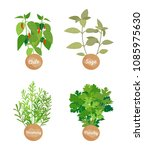 rosemary parsley  chile sage... | Shutterstock .eps vector #1085975630