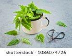 fresh nettle urtica ready to... | Shutterstock . vector #1086074726
