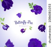 butterfly pea flowers and leaf... | Shutterstock .eps vector #1086081053