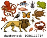 set of animals. reptile and...   Shutterstock .eps vector #1086111719