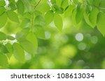 fresh green image   Shutterstock . vector #108613034