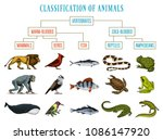 classification of animals.... | Shutterstock .eps vector #1086147920