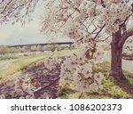 sakura park vintage photo | Shutterstock . vector #1086202373