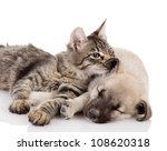 Stock photo kitten and a pup together isolated on white background 108620318