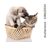 Stock photo puppy plays with a kitten isolated on white background 108620324