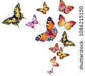 beautiful color butterflies ... | Shutterstock . vector #1086215150