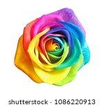 amazing rainbow rose flower on... | Shutterstock . vector #1086220913