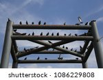 Small photo of a group of pigeons seize steel pillar