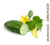 fresh  nutritious  tasty green... | Shutterstock .eps vector #1086241628