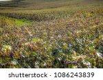 view of vineyards from... | Shutterstock . vector #1086243839