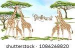 background with giraffe family... | Shutterstock .eps vector #1086268820