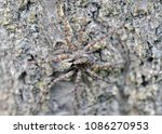 natural closeup macro of polish ... | Shutterstock . vector #1086270953