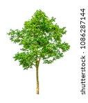 shrubs beautiful bush isolated  ... | Shutterstock . vector #1086287144