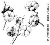 wildflower cotton flower in a... | Shutterstock .eps vector #1086293633