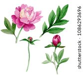 pink peony. floral botanical... | Shutterstock . vector #1086293696