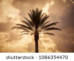 silhouette of a palm tree | Shutterstock . vector #1086354470