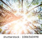 pine trees in the middle of the ... | Shutterstock . vector #1086560498
