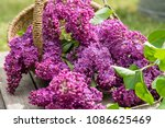 decoration with lilac | Shutterstock . vector #1086625469
