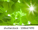 Green Laeves Background