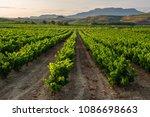 vineyard  san vicente de la... | Shutterstock . vector #1086698663