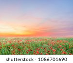 sunrise and poppies flowers... | Shutterstock . vector #1086701690