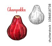 champakka fruit sketch color...   Shutterstock .eps vector #1086818738