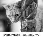 cat looking around bed post | Shutterstock . vector #1086889799