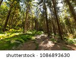 forest trees with sunlight at... | Shutterstock . vector #1086893630