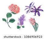 set of flowers  pink hydrangea  ...   Shutterstock . vector #1086906923