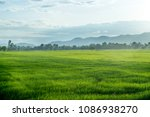 beautiful green young rice... | Shutterstock . vector #1086938270