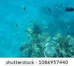 a red sea sailfin tang ... | Shutterstock . vector #1086957440