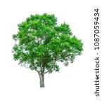 shrubs beautiful bush isolated  ... | Shutterstock . vector #1087059434