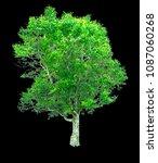 beautiful shrub bush lonely... | Shutterstock . vector #1087060268