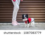 a black fluffy white ... | Shutterstock . vector #1087083779