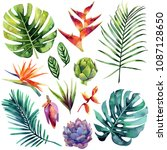 watercolor set with tropical... | Shutterstock . vector #1087128650