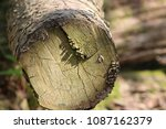 trees wood logs | Shutterstock . vector #1087162379